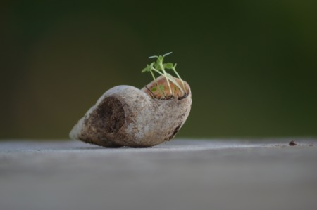 Plant In Snail
