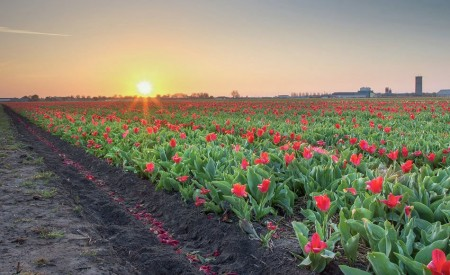 sunrise at Lisse 4th of May 2013